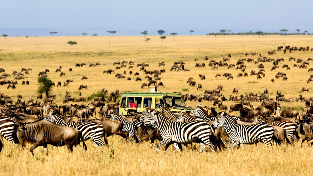 Serengeti National Park offers Exquisite Safari Experience!!!